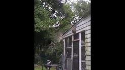 Carpenter Bee, Mice, Termite NJ | 732-309-4209 Hornet Nest Removal Bridgewater New Jersey