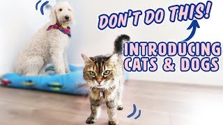 How to Introduce Dogs & Cats SAFELY  What to AVOID
