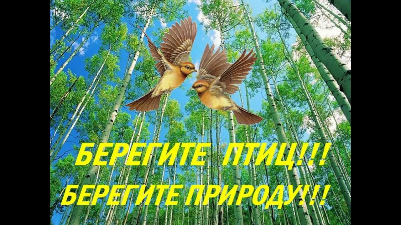 ptitsi-rossii-prezentatsiya-skachat