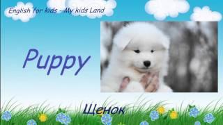 Домашние любимые животные. English for kids. Pets. Английский язык для детей.