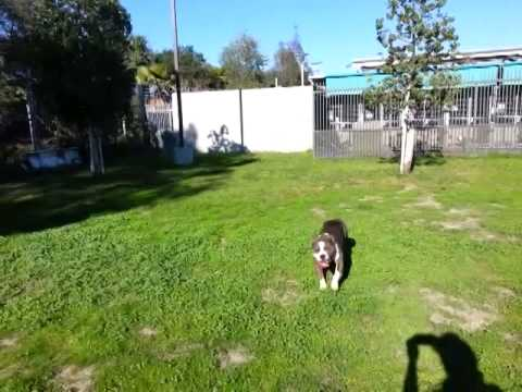 Amy North Central Shelter Los Angeles Ca Youtube