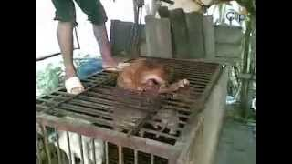 ✦VIETNAM:THE MOST BARBARIC PLACE ON EARTH FOR DOGS(4)✦