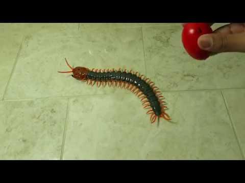 RC Remote Control Centipede Scolopendra Creepy-crawly Toy Review