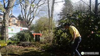 Everything You Need to Know for a Spring Garden and Yard Clean Up