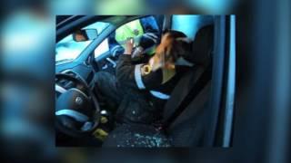 Сотрудники Госавтоинспекции задержали нетрезвого водителя, который закрылся в автомобиле