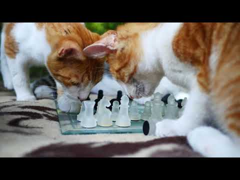 Cats playing chess 4k UHD 🐈 🐱 Symphony No. 5 by Beethoven (No copyright music)