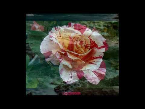 Yanni- Music Spell Life Athina 2014 (HD) ♥♫