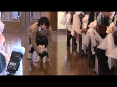 【ペットと一緒の結婚式】