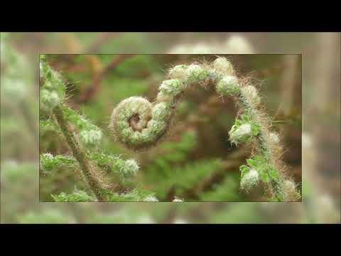 SYT - Beauty Unfold (Unfolded Dub)