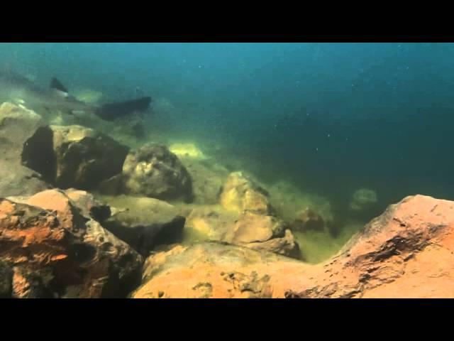 Smooth Hound Sharks Seabridge Marina