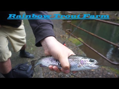 Rainbow Trout Farm Oregon - Great Place To Take The Kids!