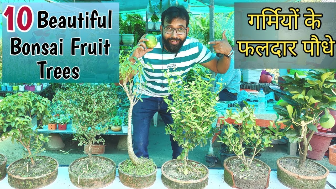 10 Most Beautiful Bonsai Fruit Trees Summer Popular Fruiting Trees In India Bonsai Youtube