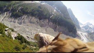 Flying Eagle | POV Footage