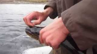 видео: Щука весной