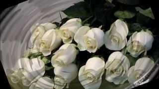 видео Белая роза – сонник. Букет из белых роз. Толкование снов
