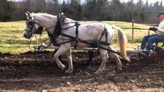 Horse Drawn Hillside plow