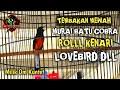 Tembakan Murai Batu Cobra Isian Kenari Lovebird Ngotot Mewah Bikin Gacor Murai Lain Om Kuntet Pati  Mp3 - Mp4 Download