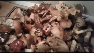 Да! Неурожай грибов в этом году ,сентябрь 2017((((
