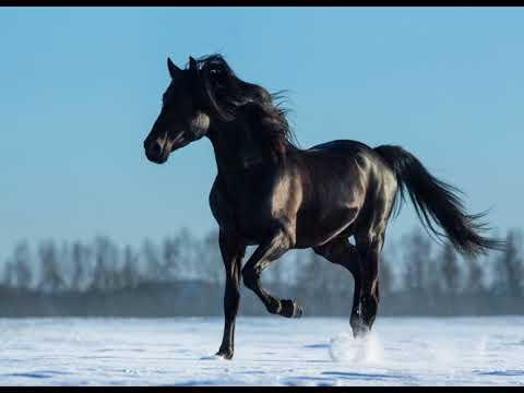 Бахталэ рома- на вороном коне