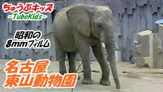【昭和の8mmフィルム】 東山動物園(名古屋)