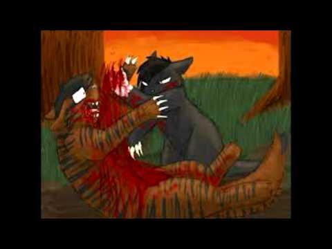 Коты воители бич и звездоцап