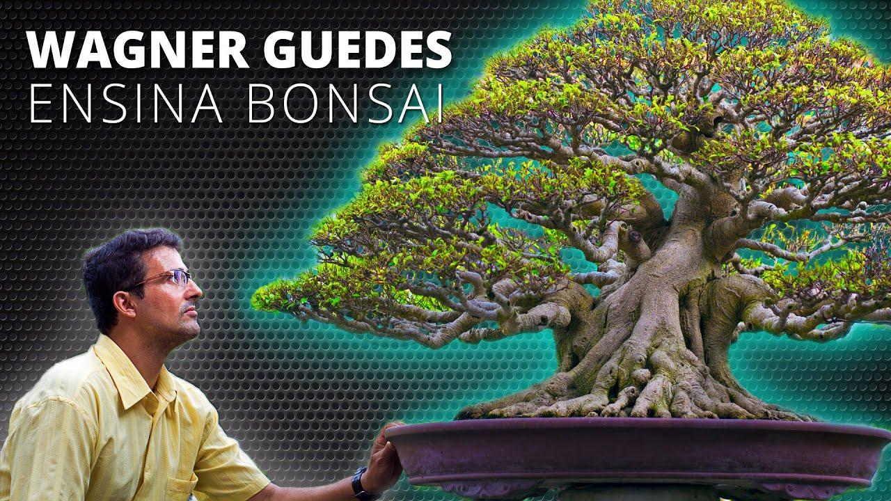 Wagner Guedes - Ensina Bonsai