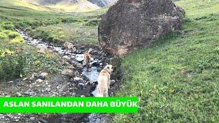 AZAP BANA SU İÇİRMEMEYİ KAFAYA KOYMUŞ - (4K)