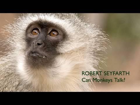 Robert Seyfarth: Can Monkeys Talk?