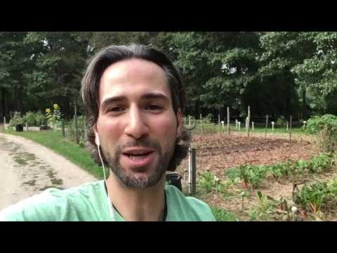 How to Clone Organic Fig Trees From Your Local Organic farm Part 1