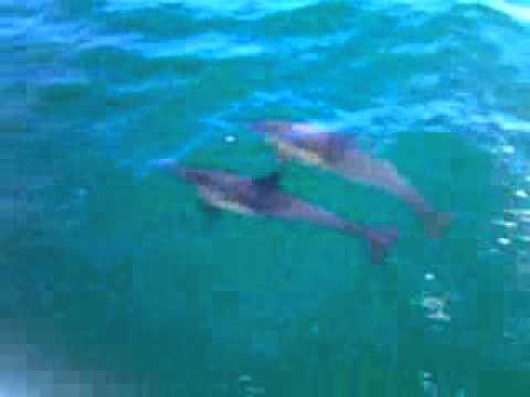 Sailing with Dolphins in Santa Monica Bay