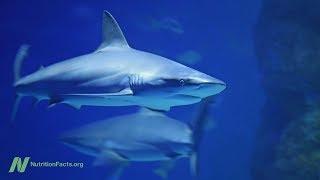 Doplňky ze žraločích chrupavek testovány na léčbu rakoviny