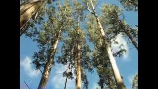 Экскурсия с русским гидом в национальный парк Данденонг(, 2013-09-23T17:50:41.000Z)