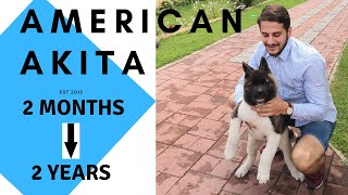 American AKITA | AKI | From puppy to adult | 2 months  2 years | Growing | Playing | Loving | Dogs