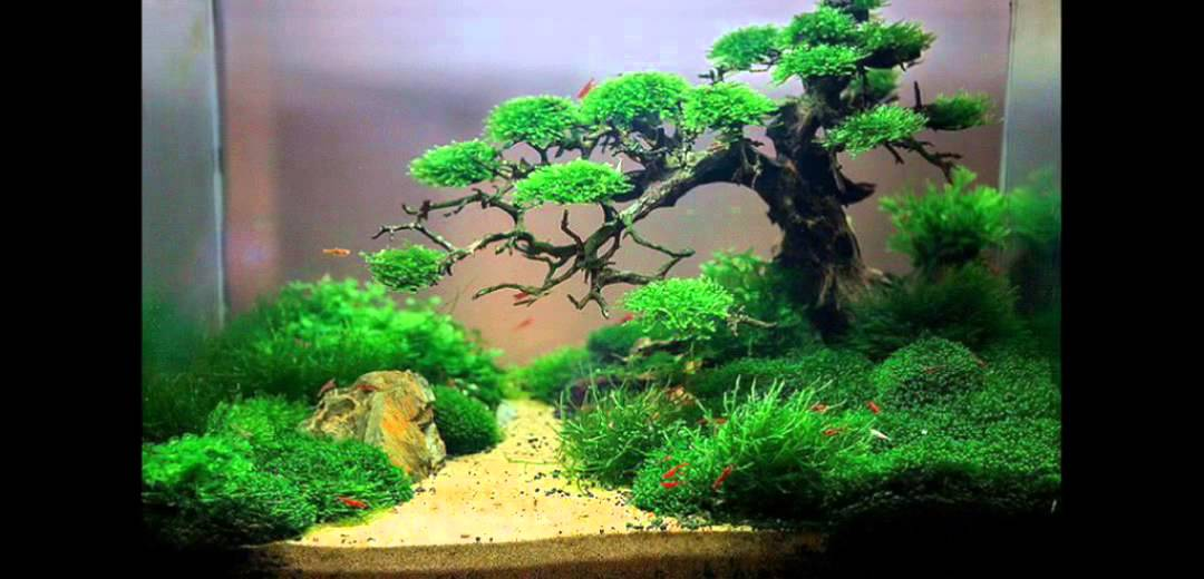 aquarium ideas aquarium ideen id es aquarium youtube. Black Bedroom Furniture Sets. Home Design Ideas