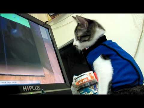 螢幕上播放的老鼠貓咪信以為真