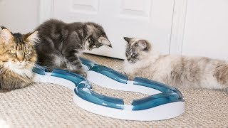 Our Cats Play with Catit Design Senses Circuit Toy