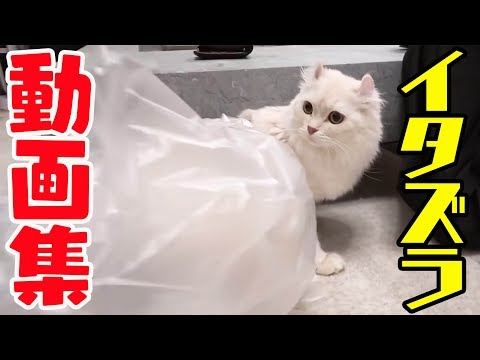 マロンのイタズラ動画集 2017�