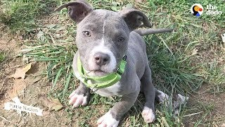 pittie-puppy-sets-her-mind-to-do-the-impossible-the-dodo-pittie-nation