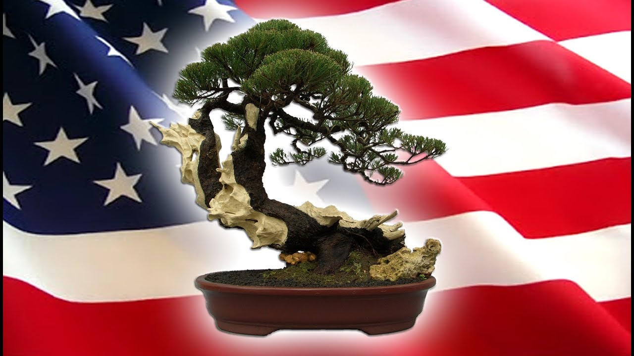 Bonsai Tree Exhibition N Demo In New Orleans Louisiana America Tedy Boy Bonsai Of Indonesia Youtube