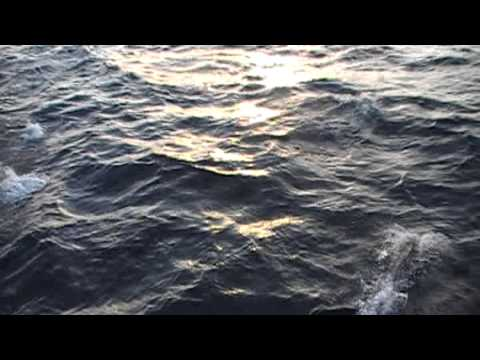 Huge School of Dolphins 800 miles Offshore