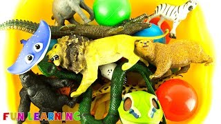 Learn Names of Wild Animals For Kids with Fun Box of Animal Toys For Education