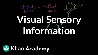 Visual sensory information | Processing the Environment | MCAT | Khan Academy