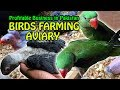 Birds Farming Aviary | A Profitable Business in Pakistan | Video in URDU/Hindi