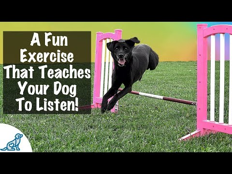 How To Teach A Dog To Jump - Professional Dog Training Tips