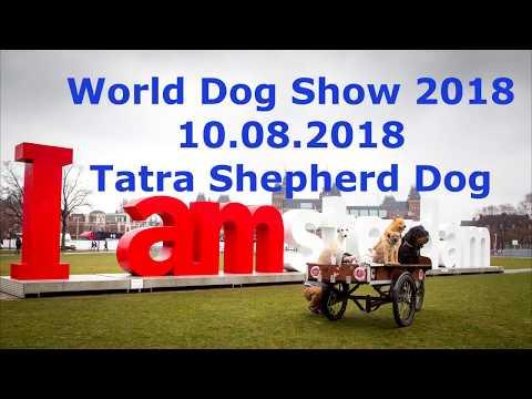 WDS2018 - 10.08.2018. Tatra Shepherd Dog.