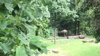 Bronx zoo elephant