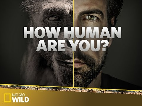 How Human Are You? (Test of Character/Morals/Empathy/Cuteness) *Foolproof*