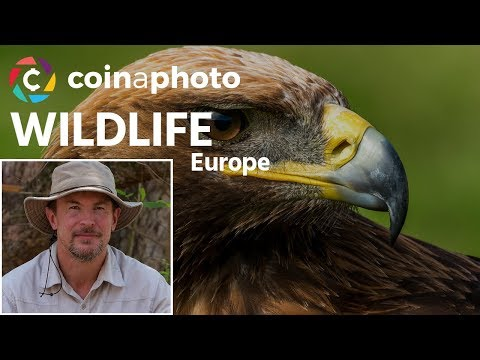 Wildlife in Europe with Nick Dale | Phototalk | Coinaphoto