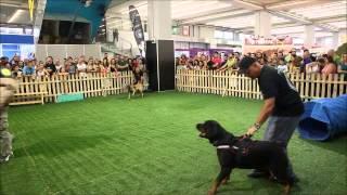 Rottweiler Kennel -- Ε.Κ.Ε.Σ