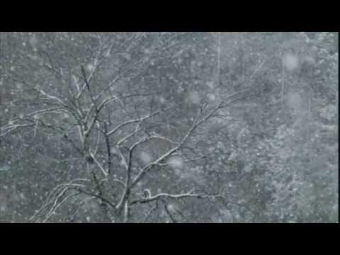 Jeff Buckley - Lilac Wine (HD) (Grace 1994)